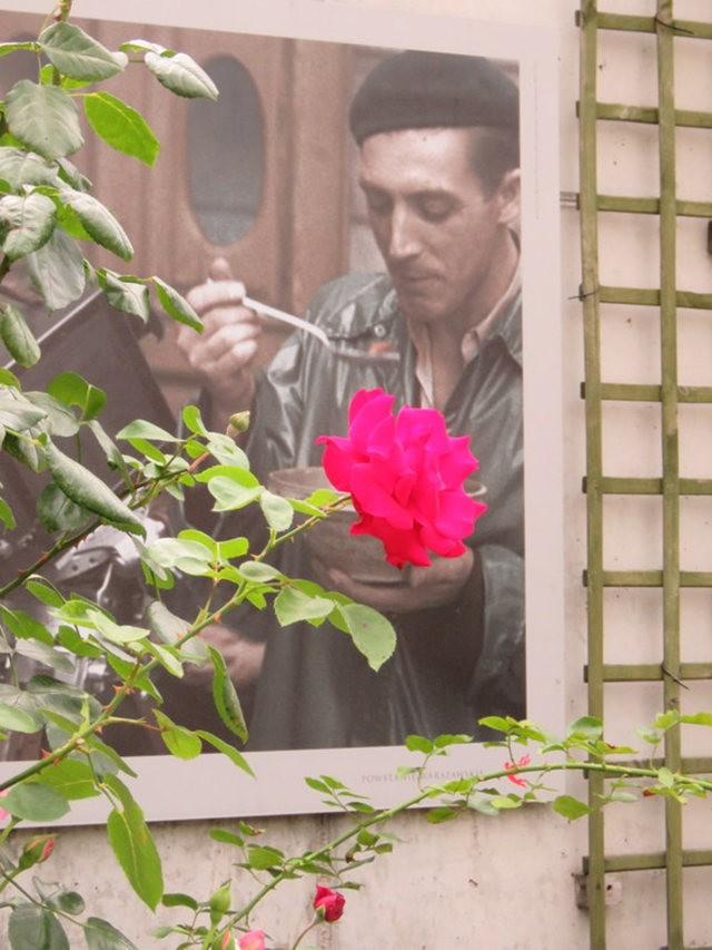 华沙起义博物馆的玫瑰园_图1-28