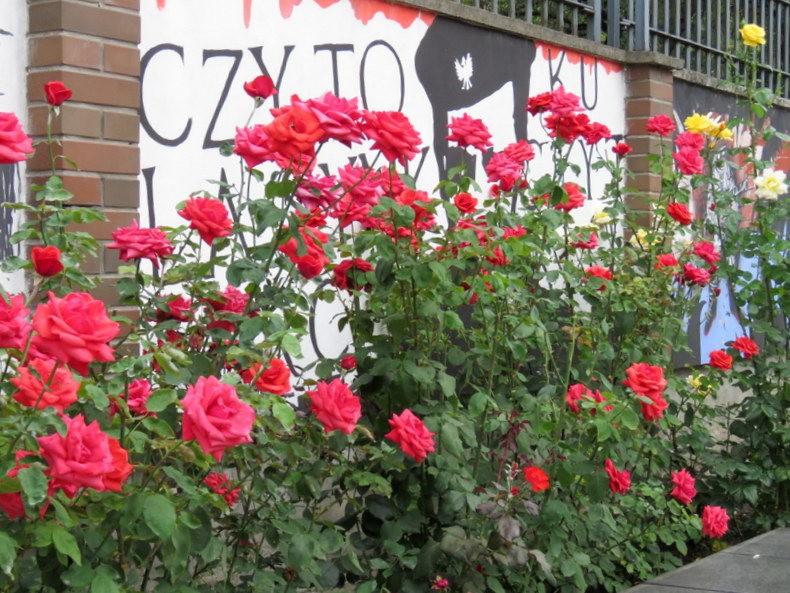 华沙起义博物馆的玫瑰园_图1-32