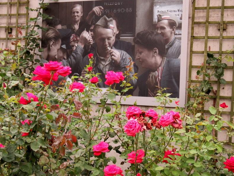 华沙起义博物馆的玫瑰园_图1-33