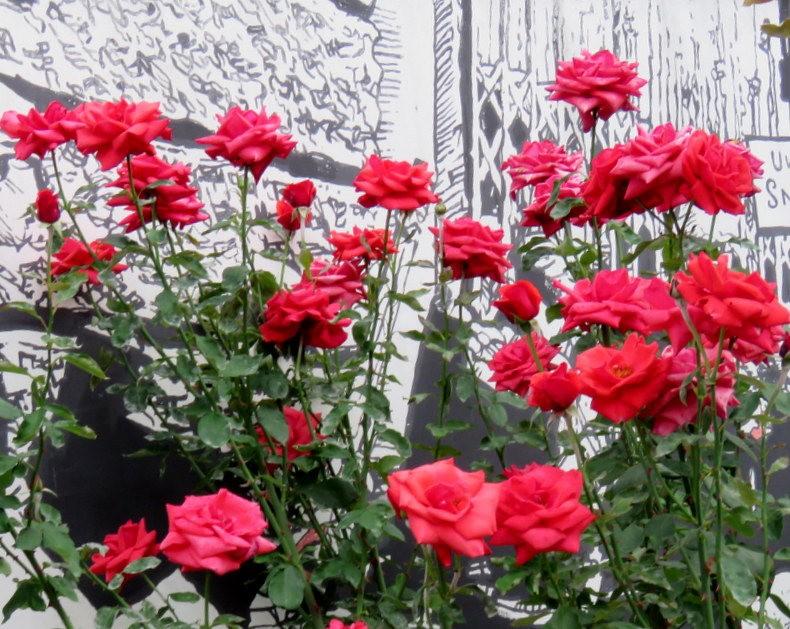 华沙起义博物馆的玫瑰园_图1-35