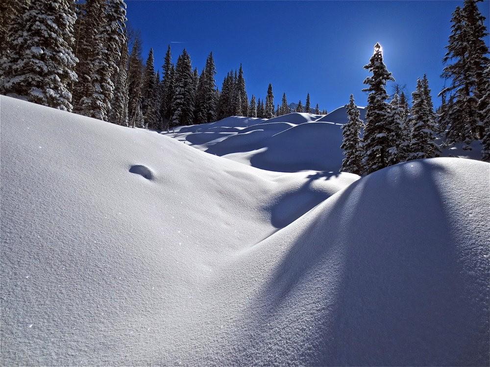 科罗拉多的林海雪原_图1-1
