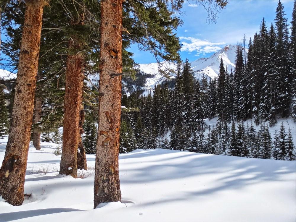 科罗拉多的林海雪原_图1-2