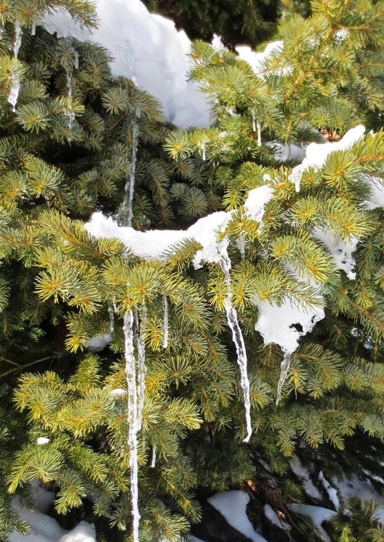 科罗拉多的林海雪原_图1-21