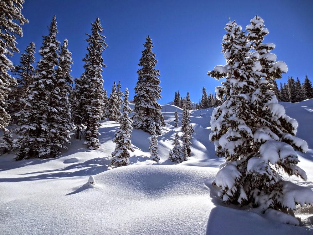 科罗拉多的林海雪原_图1-23