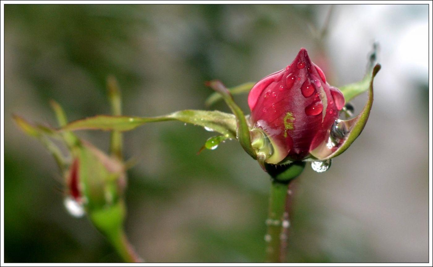 秋雨赋_图1-1