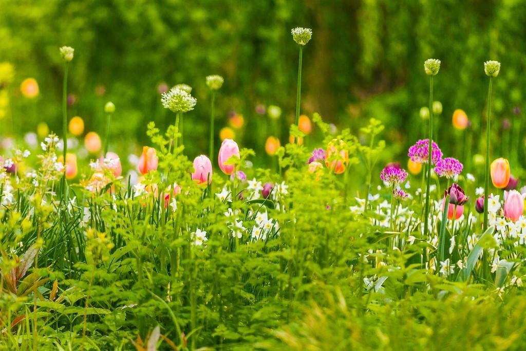 Chanticleer花园,闻着花香_图1-28