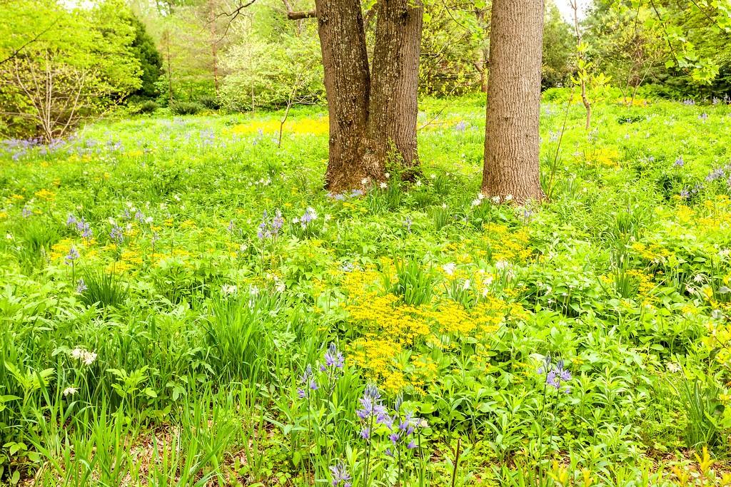 Chanticleer花园,闻着花香_图1-25
