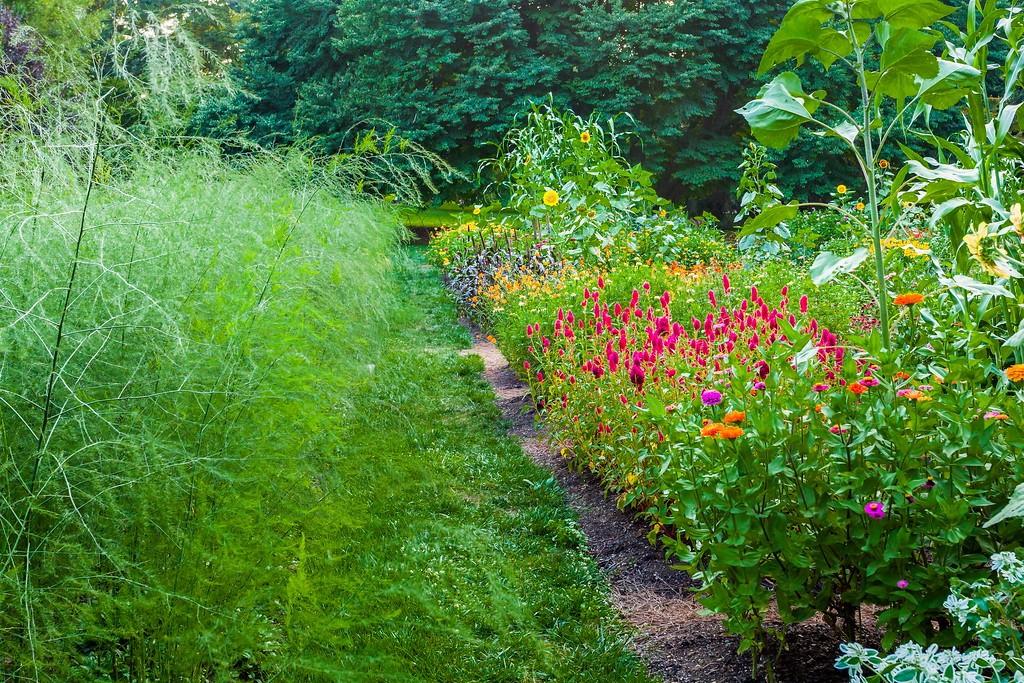 Chanticleer花园,闻着花香_图1-22
