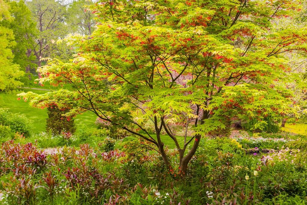 Chanticleer花园,闻着花香_图1-23