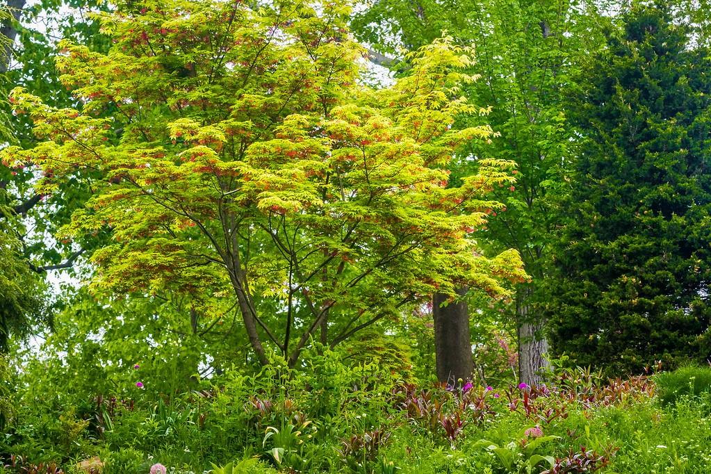 Chanticleer花园,闻着花香_图1-19