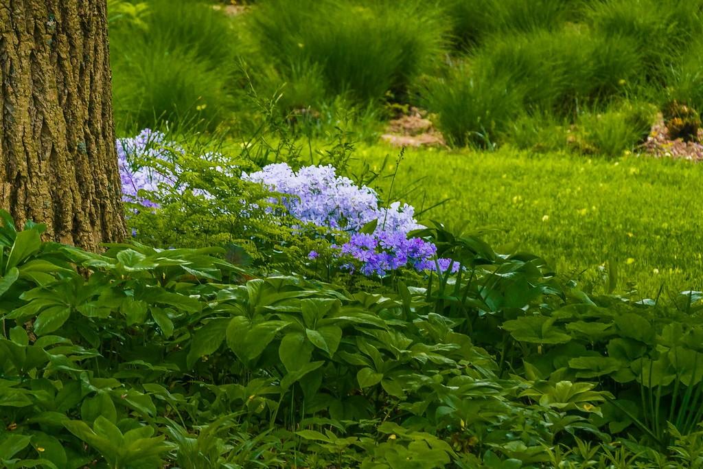 Chanticleer花园,闻着花香_图1-13