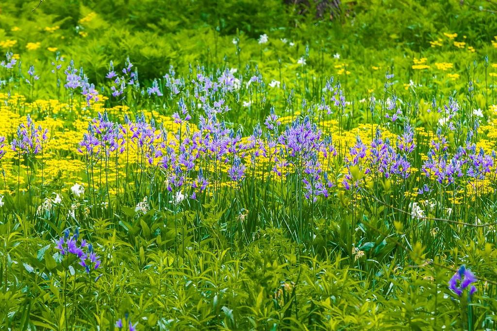 Chanticleer花园,闻着花香_图1-9