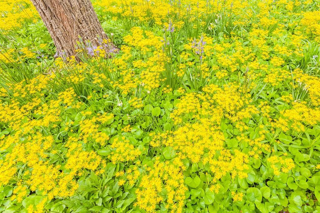 Chanticleer花园,闻着花香_图1-10