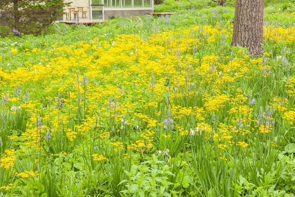 Chanticleer花园,闻着花香_图1-4