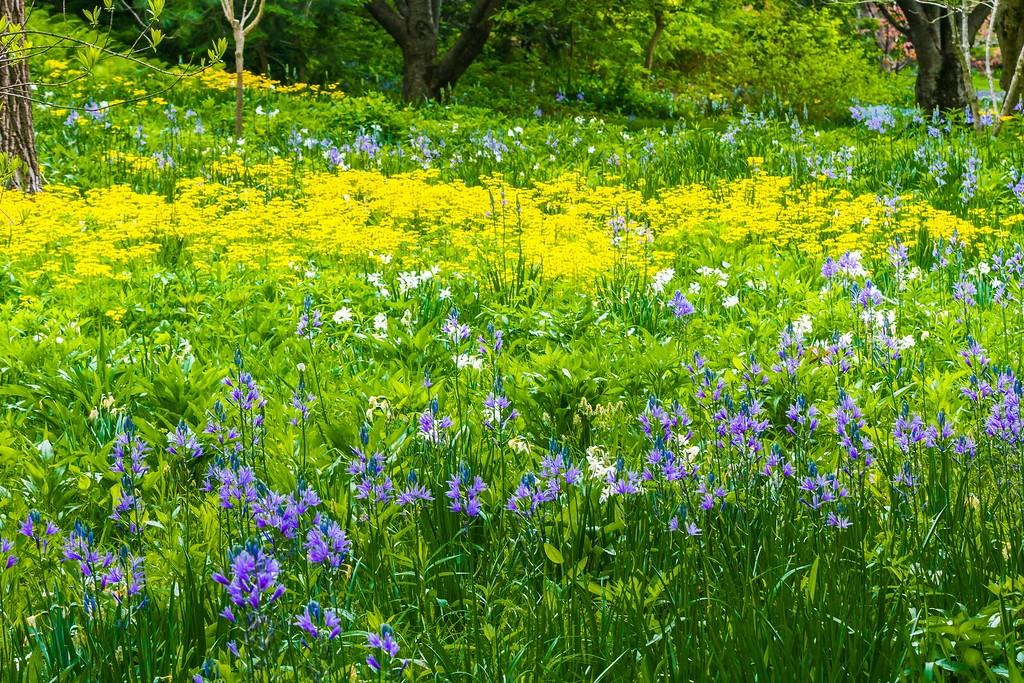 Chanticleer花园,闻着花香_图1-3