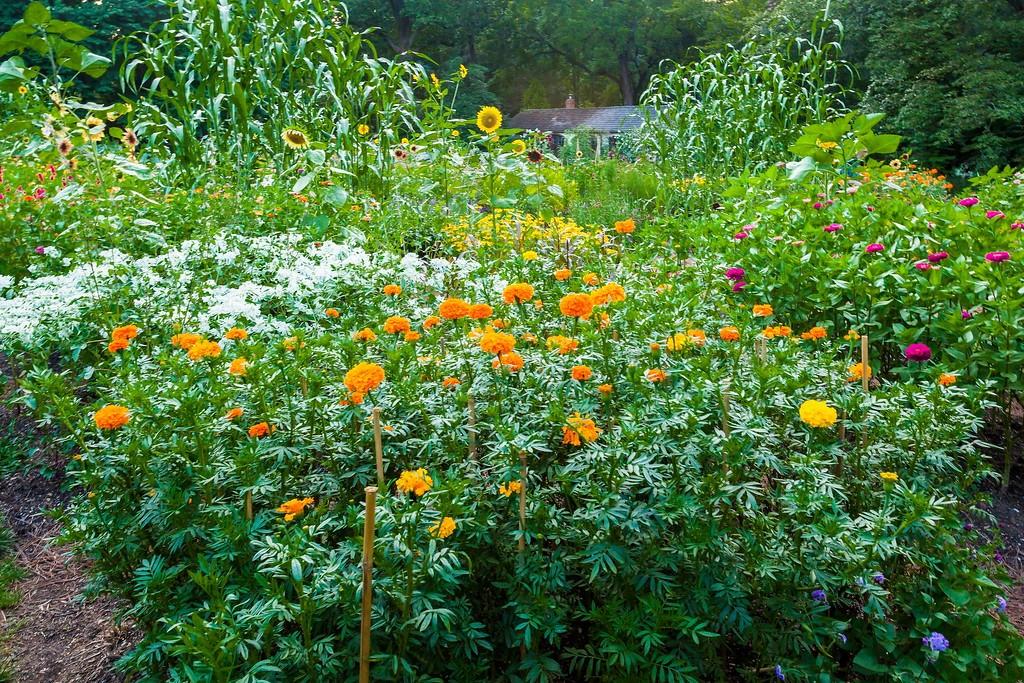 Chanticleer花园,闻着花香_图1-1