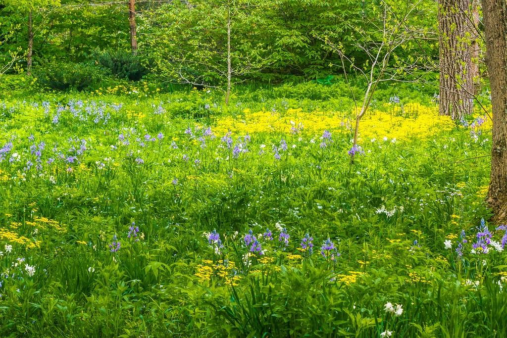 Chanticleer花园,闻着花香_图1-7