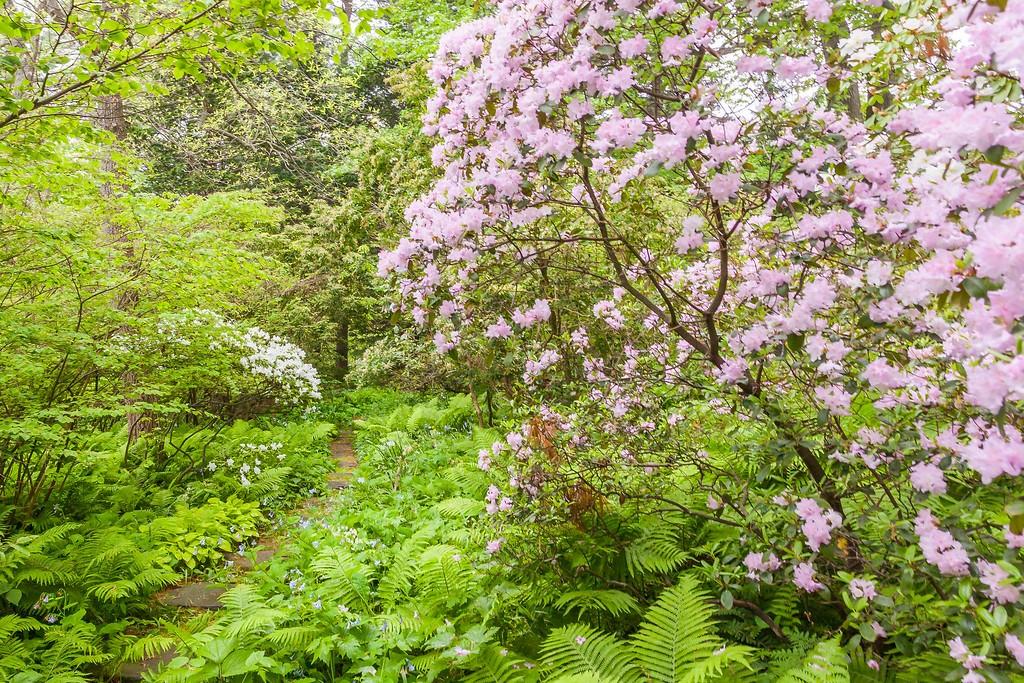 Chanticleer花园,闻着花香_图1-29