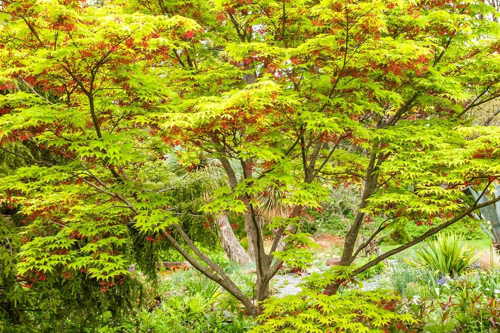 Chanticleer花园,闻着花香_图1-8
