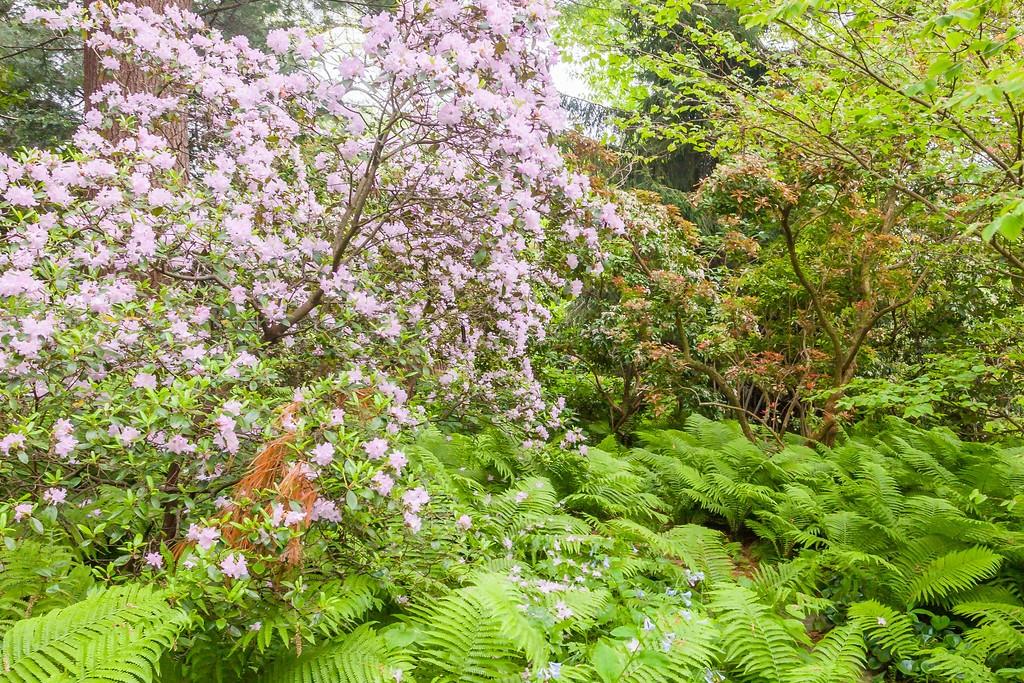Chanticleer花园,闻着花香_图1-30