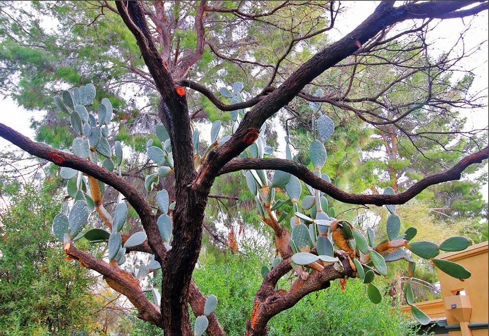 图森植物园的新形象_图1-32
