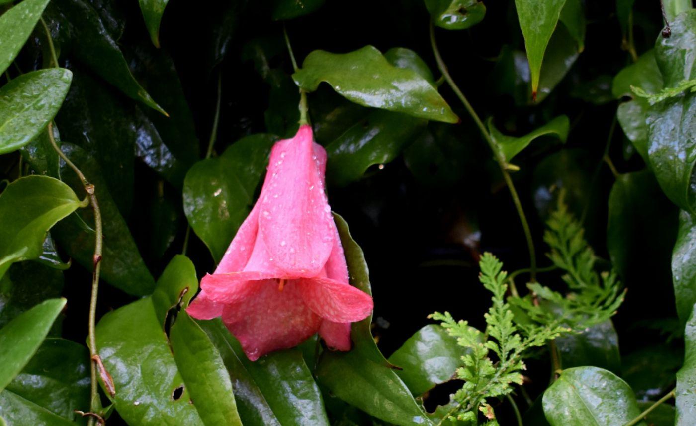 植物园温室花卉随拍_图1-3