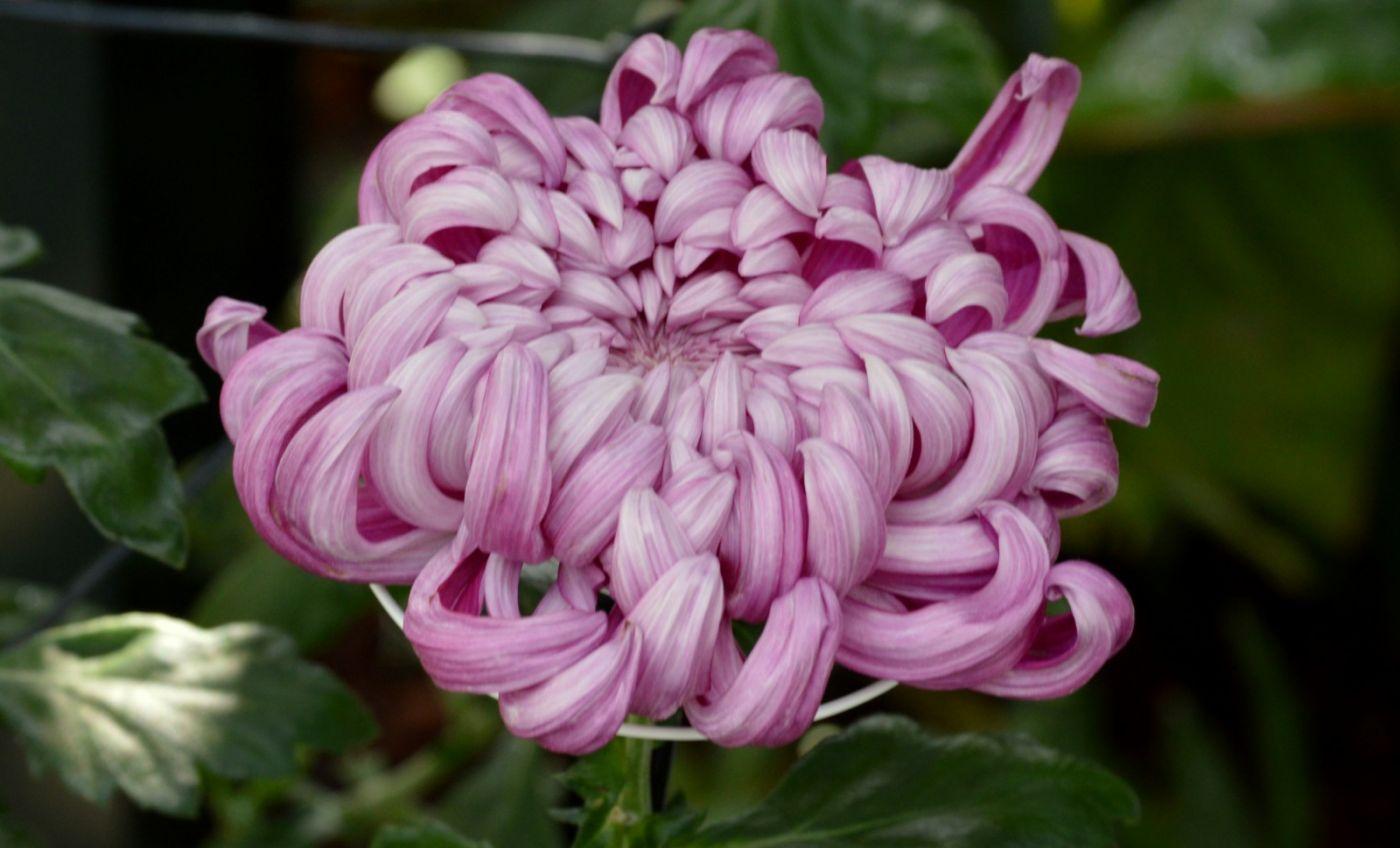 植物园温室花卉随拍_图1-4