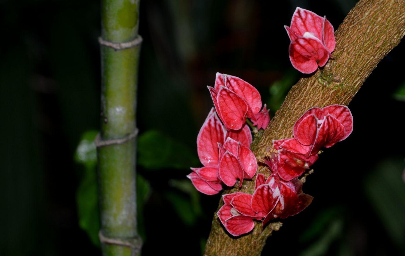 植物园温室花卉随拍_图1-6