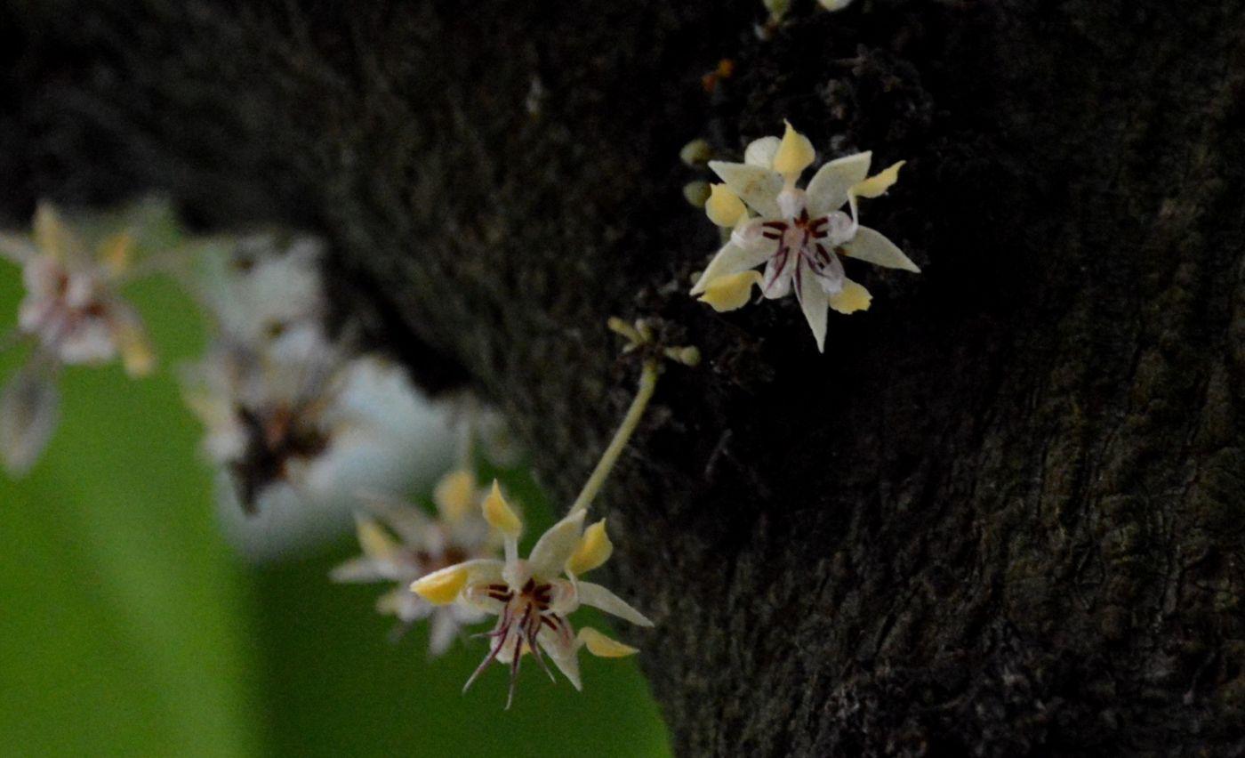 植物园温室花卉随拍_图1-11