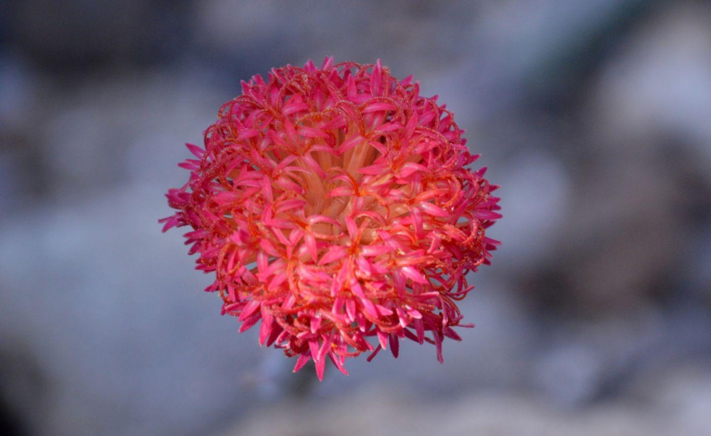 植物园温室花卉随拍_图1-13