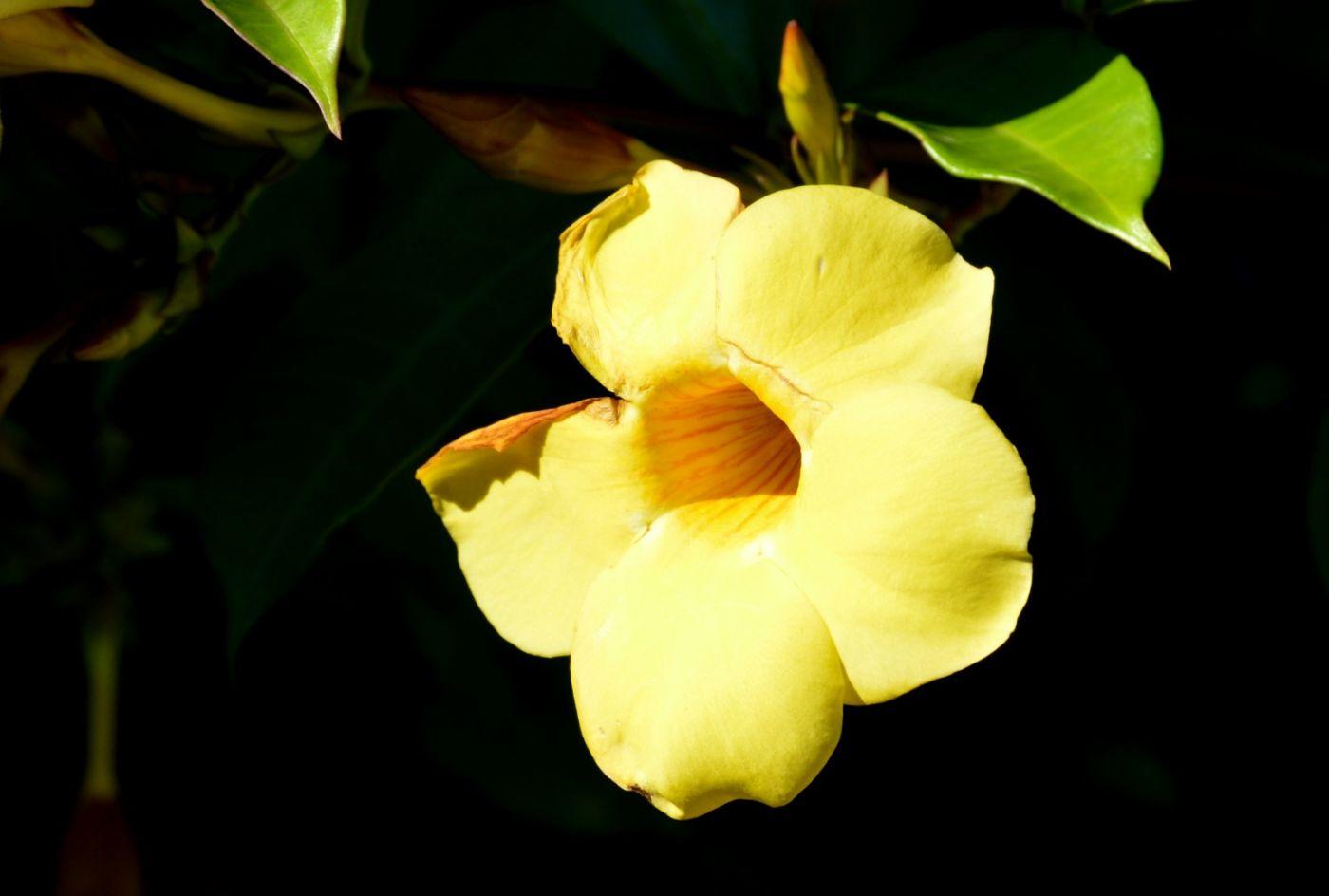 植物园温室花卉随拍_图1-14