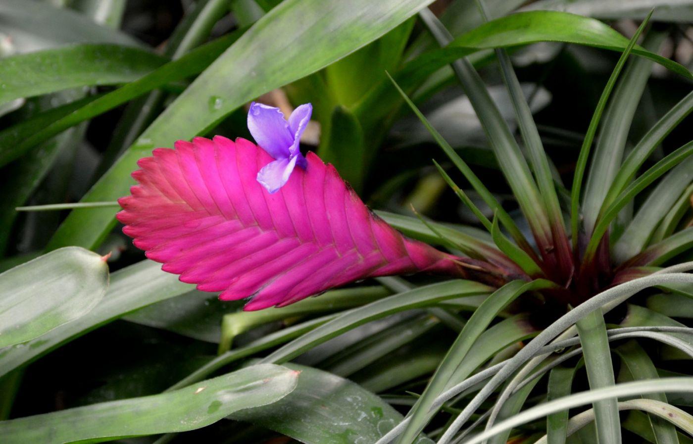 植物园温室花卉随拍_图1-17