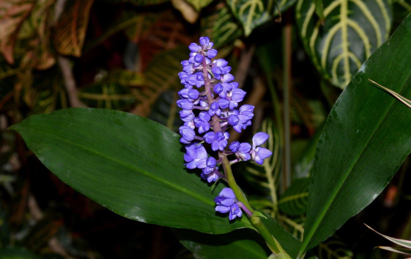 植物园温室花卉随拍_图1-21