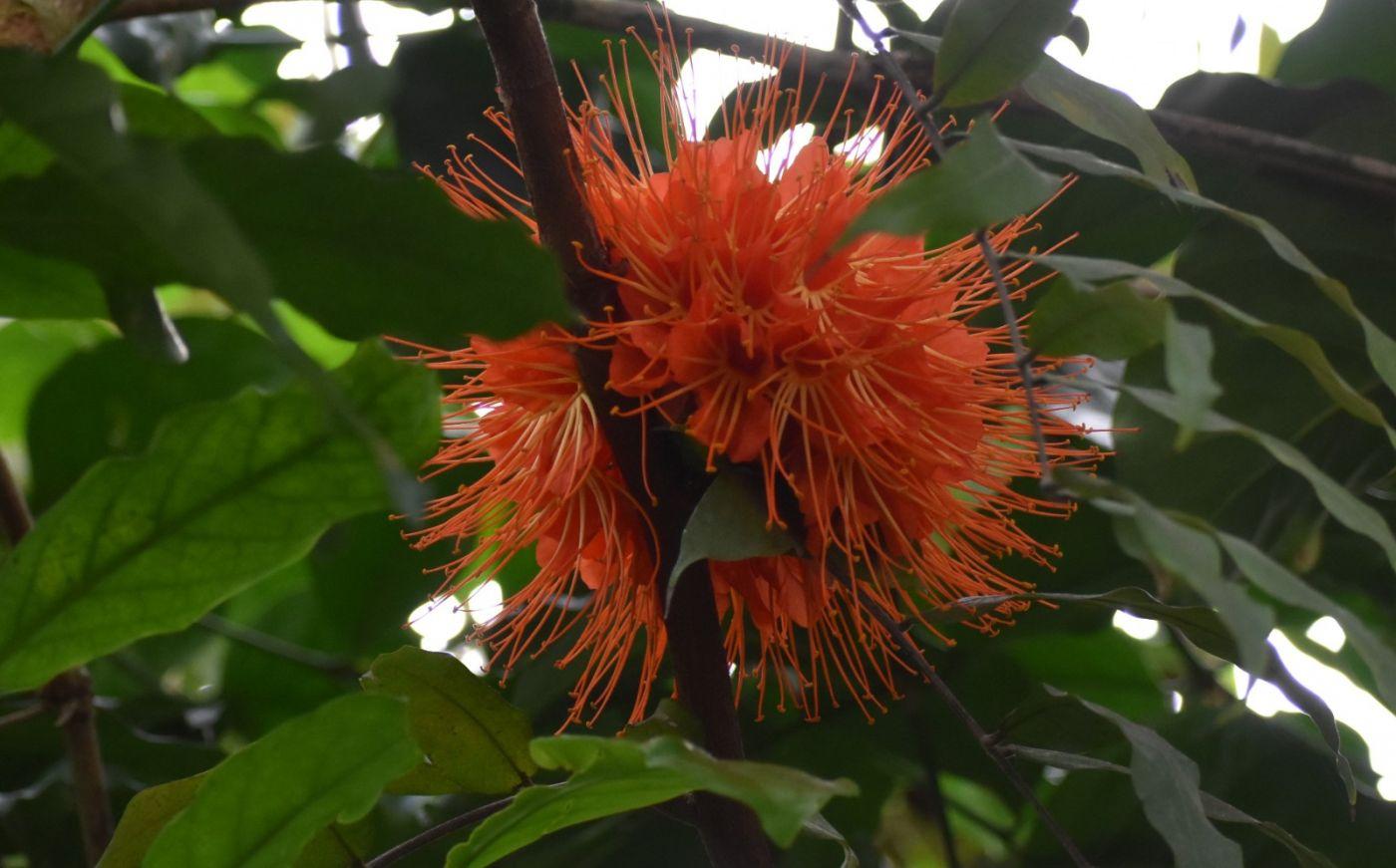 植物园温室花卉随拍_图1-26