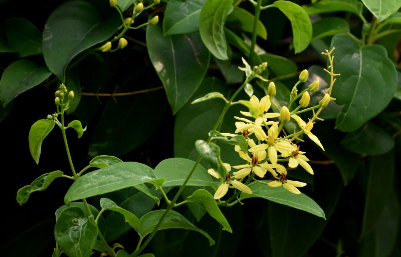 植物园温室花卉随拍_图1-27