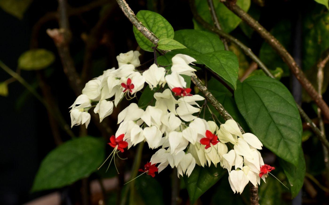 植物园温室花卉随拍_图1-28