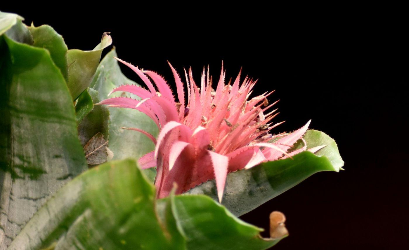 植物园温室花卉随拍_图1-29