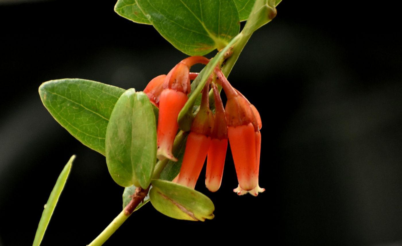 植物园温室花卉随拍_图1-30