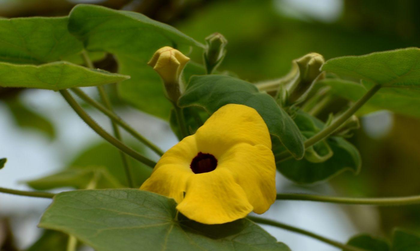 植物园温室花卉随拍_图1-31