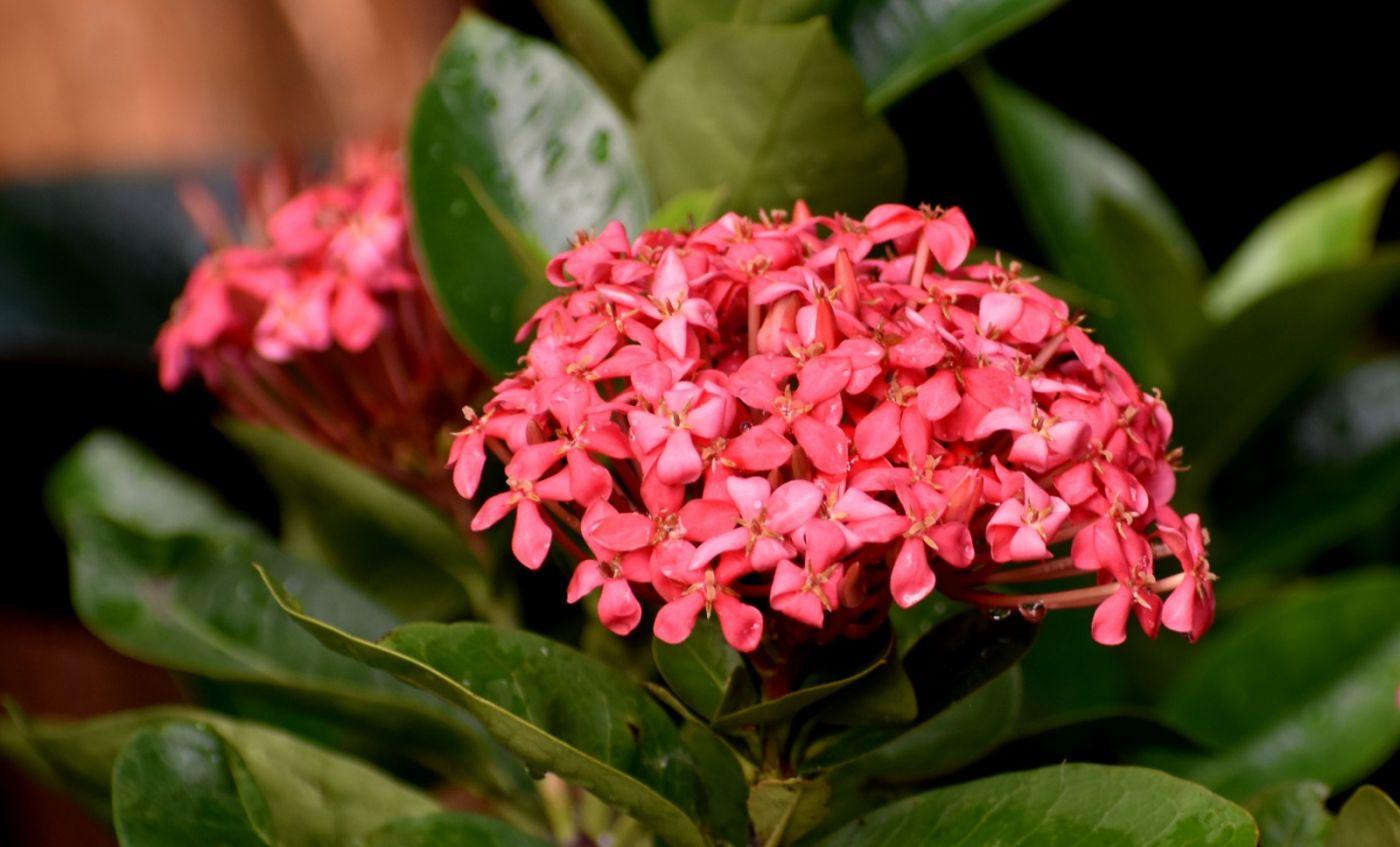 植物园温室花卉随拍_图1-32