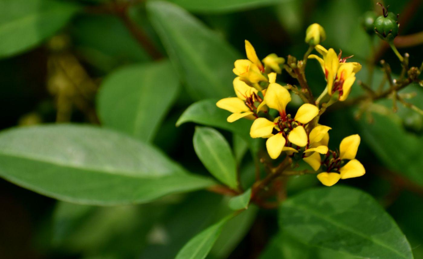 植物园温室花卉随拍_图1-33