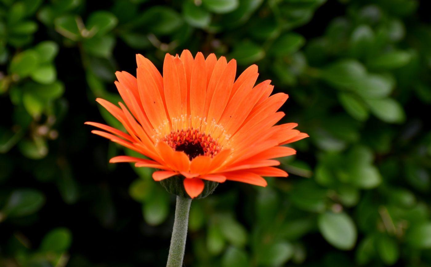 植物园温室花卉随拍_图1-34