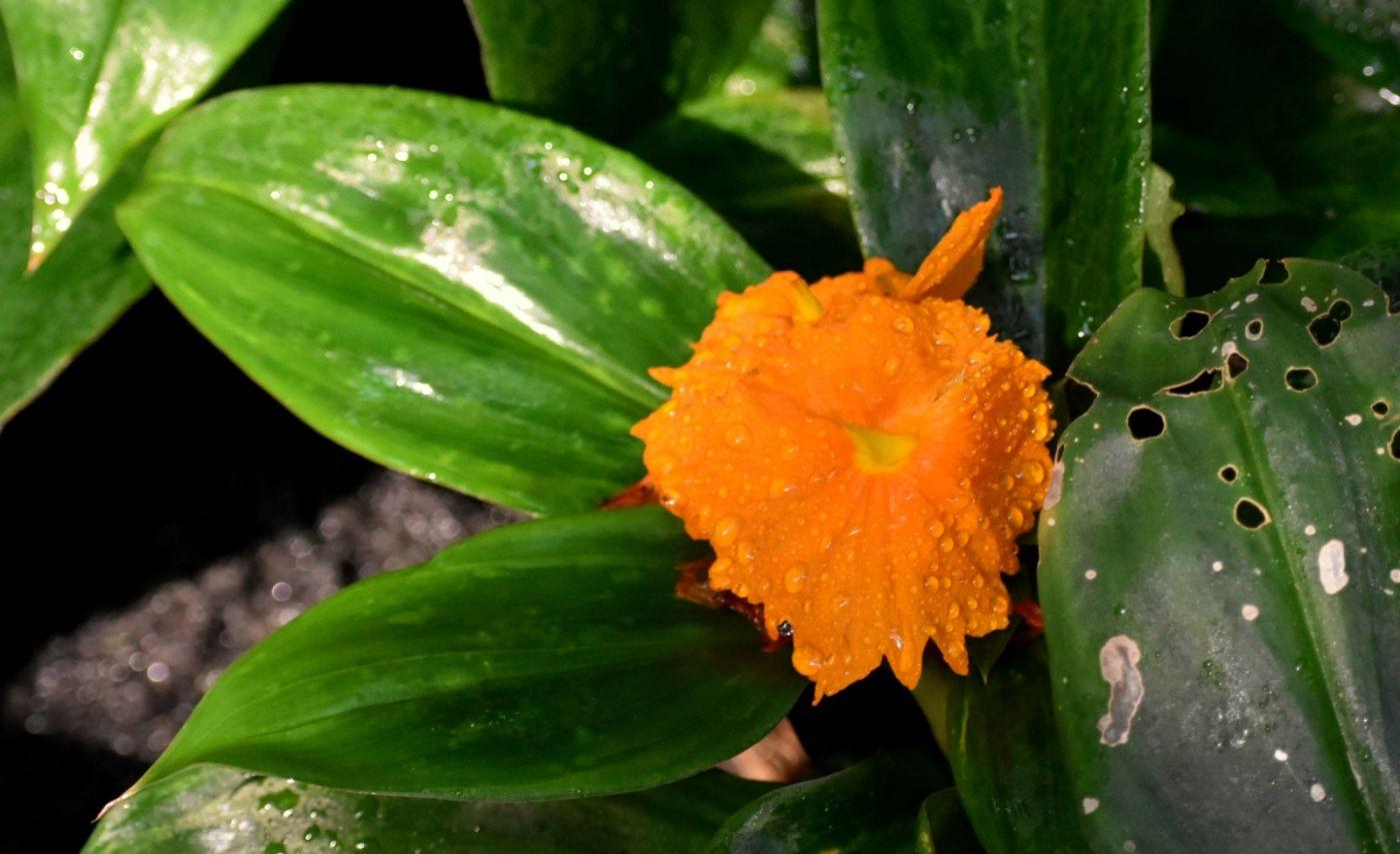 植物园温室花卉随拍_图1-35