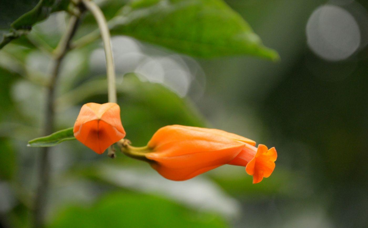 植物园温室花卉随拍_图1-40