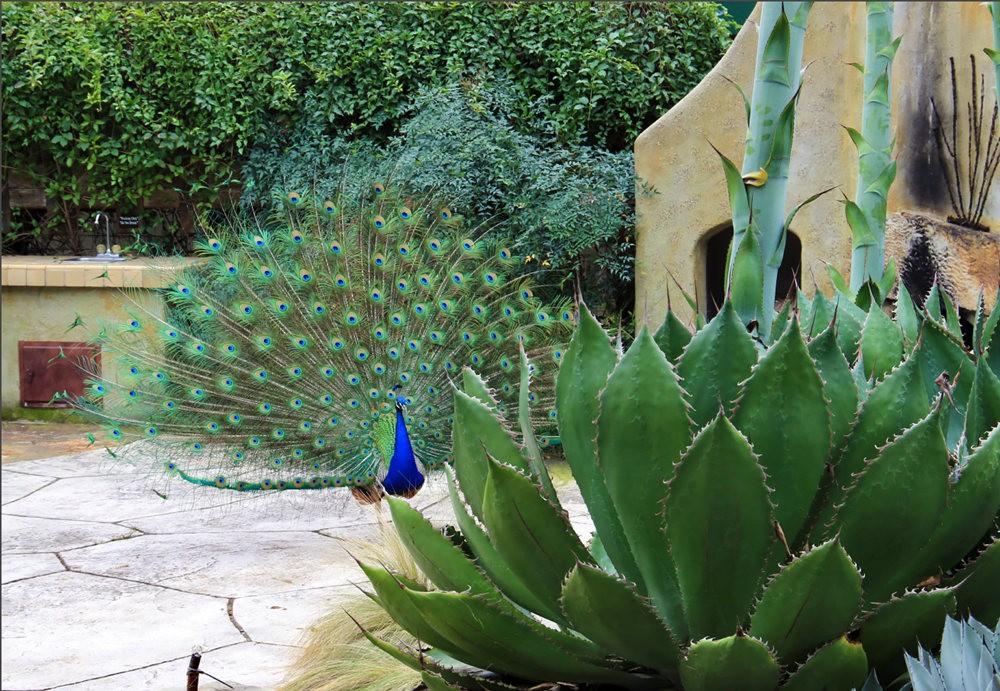 洛杉矶县植物园的辉煌_图1-3