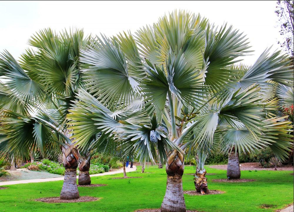 洛杉矶县植物园的辉煌_图1-17