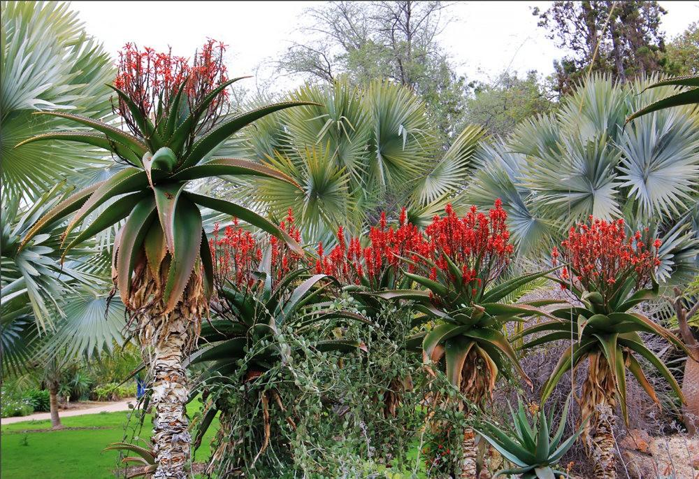 洛杉矶县植物园的辉煌_图1-18