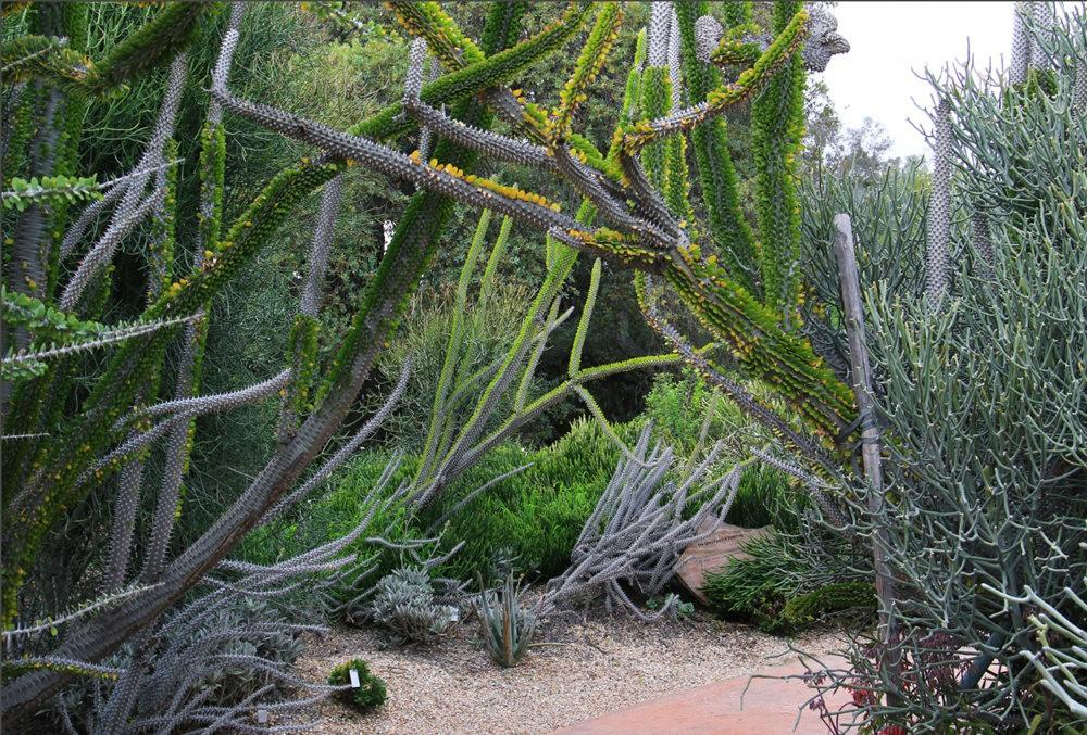 洛杉矶县植物园的辉煌_图1-23