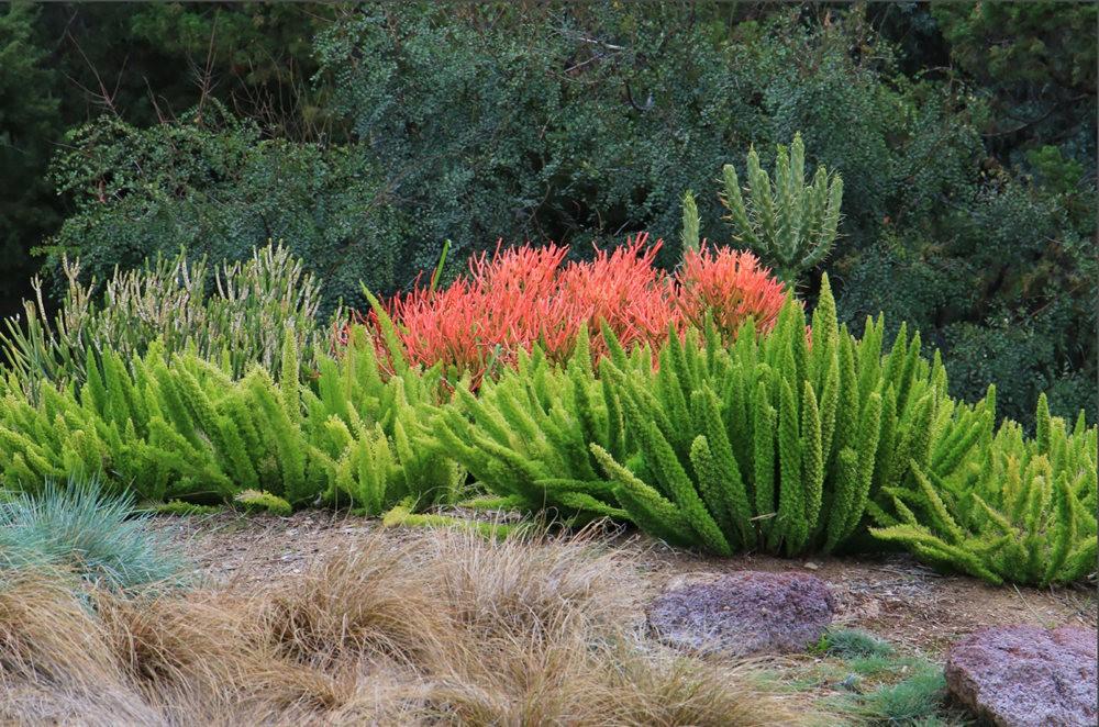 洛杉矶县植物园的辉煌_图1-24