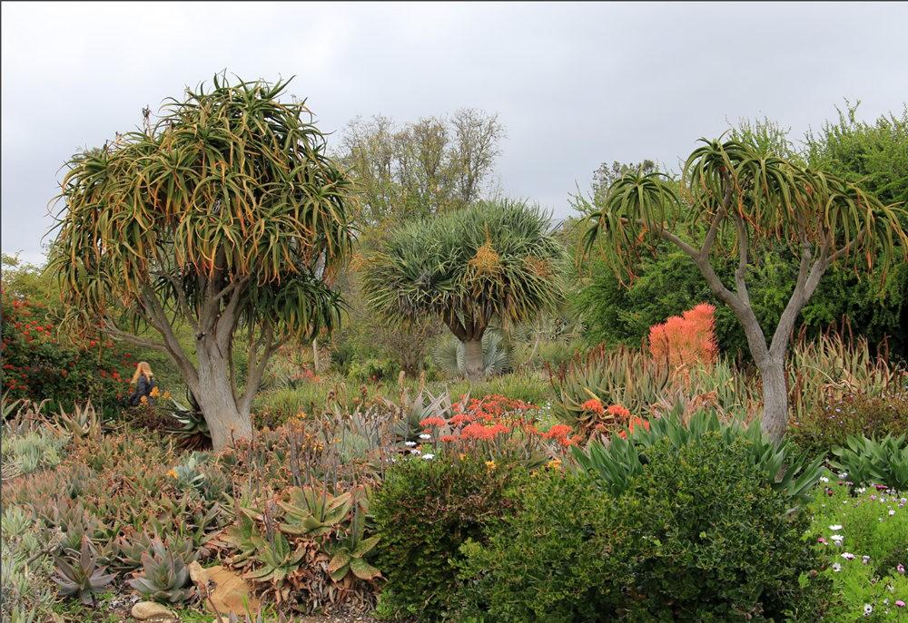 洛杉矶县植物园的辉煌_图1-25